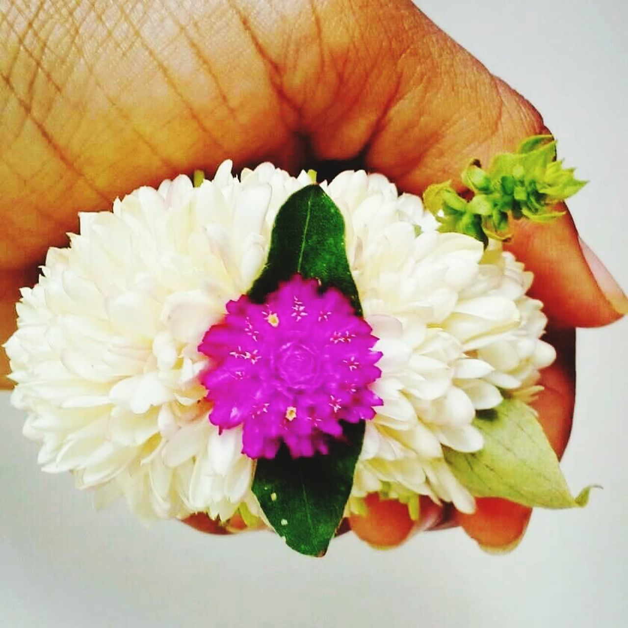 flower, freshness, close-up, petal, beauty in nature, no people, fragility, flower head, nature, day, indoors