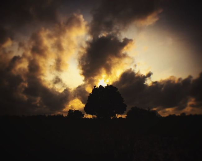Silhouette Tranquil Scene Tranquility Scenics Tree Beauty In Nature Sunset Landscape Nature Majestic Dark Sky Outline Cloud - Sky Non-urban Scene Environment Growth Calm Outdoors Atmosphere First Eyeem Photo