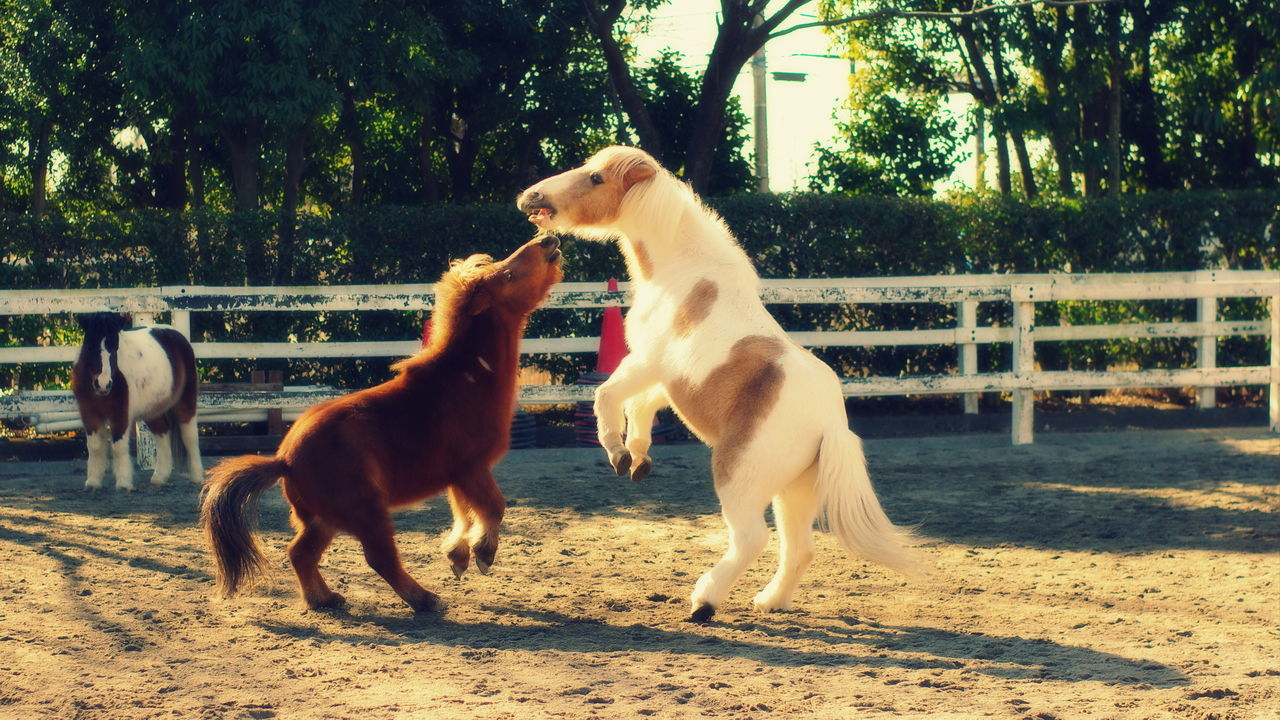 domestic animals, animal themes, tree, mammal, two animals, dog, outdoors, nature, day, full length, pets, motion, no people, togetherness