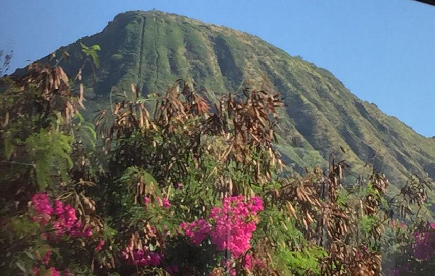 Koko Head  Oahu Mountain Growth No People Scenics Flowers Day Oahu, Hawaii Clear Sky Landscape Tropics Tropical Hawaii Tropical Paradise Lost In The Landscape Second Acts Island Of Oahu, Hawaii Oahu / Hawaii An Eye For Travel