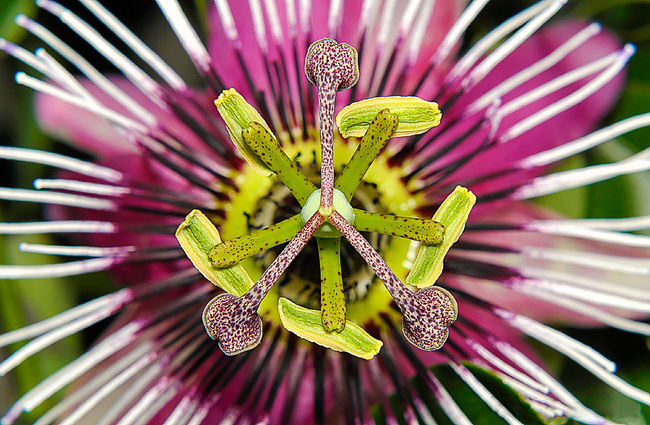 Botany Close-up Flower Focus On Foreground Macro Marcokleinphotography Nature No People Passion Plant Springtime