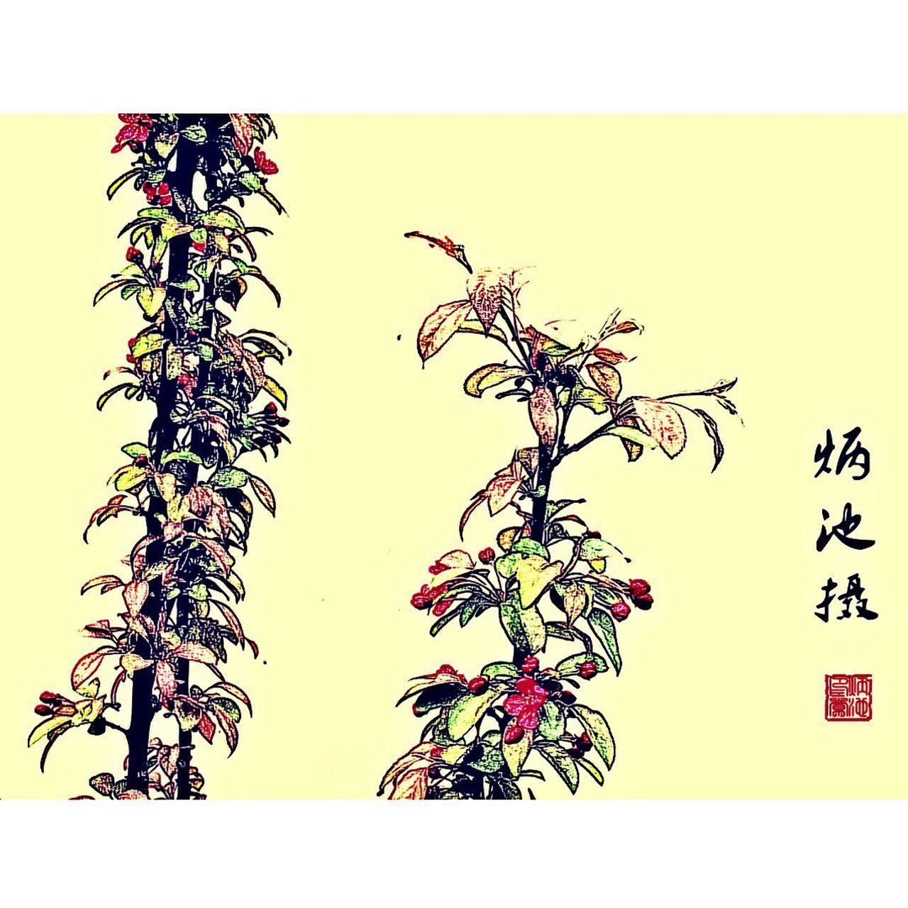 First Eyeem Photo EyeEm Photo Photography Photoshoot Photooftheday 国画 Chinese Style Building Chinese Style The Traditional Chinese Painting Chinese Cabbage