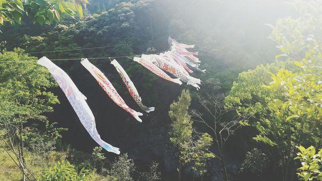 Japan Sky Lifeisbeautiful EventPhotography Japan Photography Japan Photography JapanLife Japan Photos Carp Streamer
