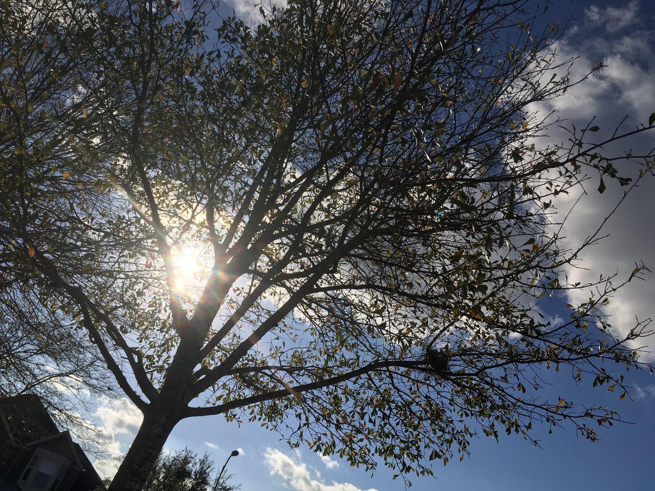 Silhouette Tree Silhouette Tree Sun Glare Blue Sky Sky Clouds Clouds And Sky