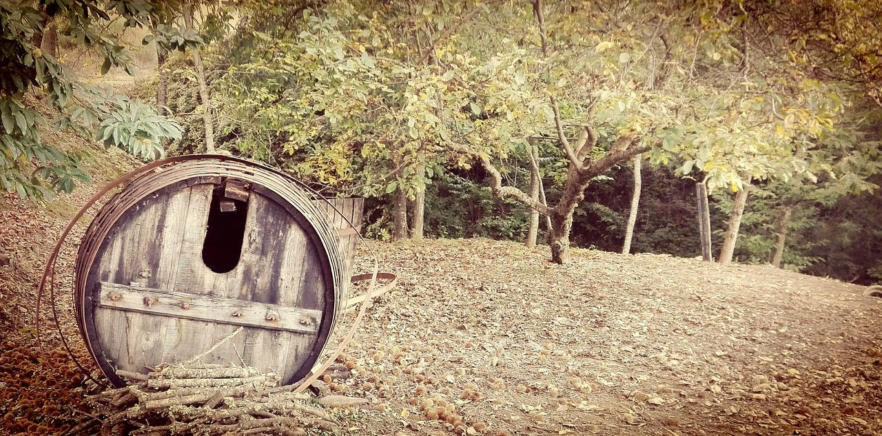 Full Frame Outdoors Nature Barrels Of Wine Wood Barrel Douro  Trás Os Montes Portugal