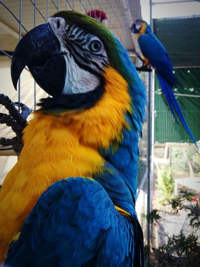 My lovely friend Mario! Parrot Bird Photography Animals IPhoneography Eyemphotography Fresh on Market April 2016