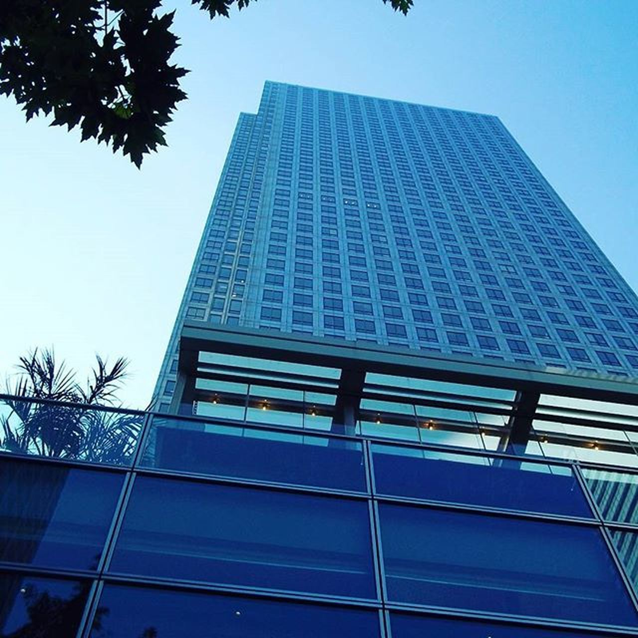 architecture, built structure, building exterior, low angle view, modern, skyscraper, day, tall, outdoors, no people, blue, city, growth, tree, corporate business, sky
