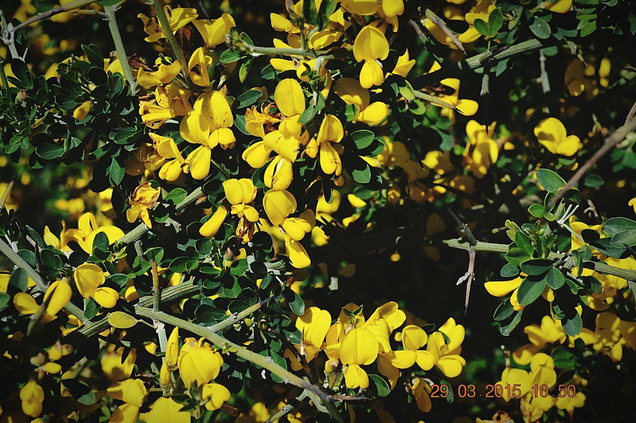 Tiria Ginestra Myphoto Nikon3200 Sea Posada