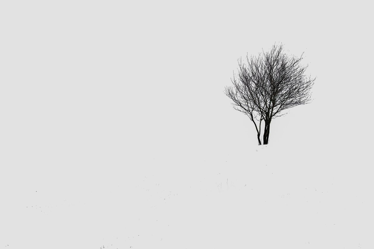 Copy Space Bare Tree Tree Nature Branch No People White Background Day Outdoors Snowing Landscape JGLowe Scenics Tranquil Scene Tranquility Cold Temperature Beauty In Nature