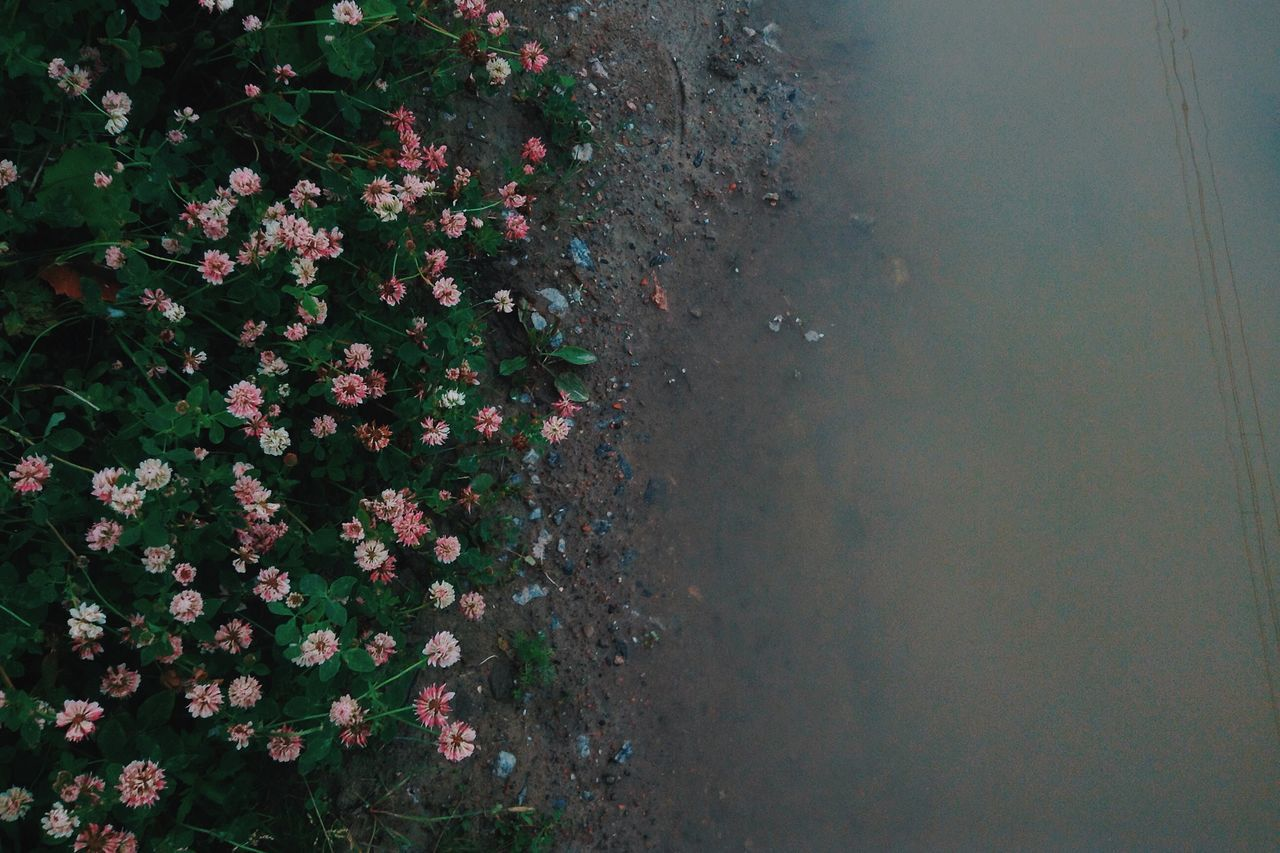 growth, nature, flower, plant, vegetation, flora, leaf, outdoors, no people, day