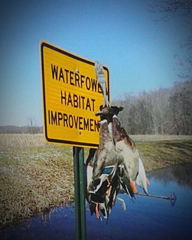Dead Bird Ducks In A Row Duckhunt Waterfowl Signs Signs Everywhere Signs Habitat Wildlifeconservation