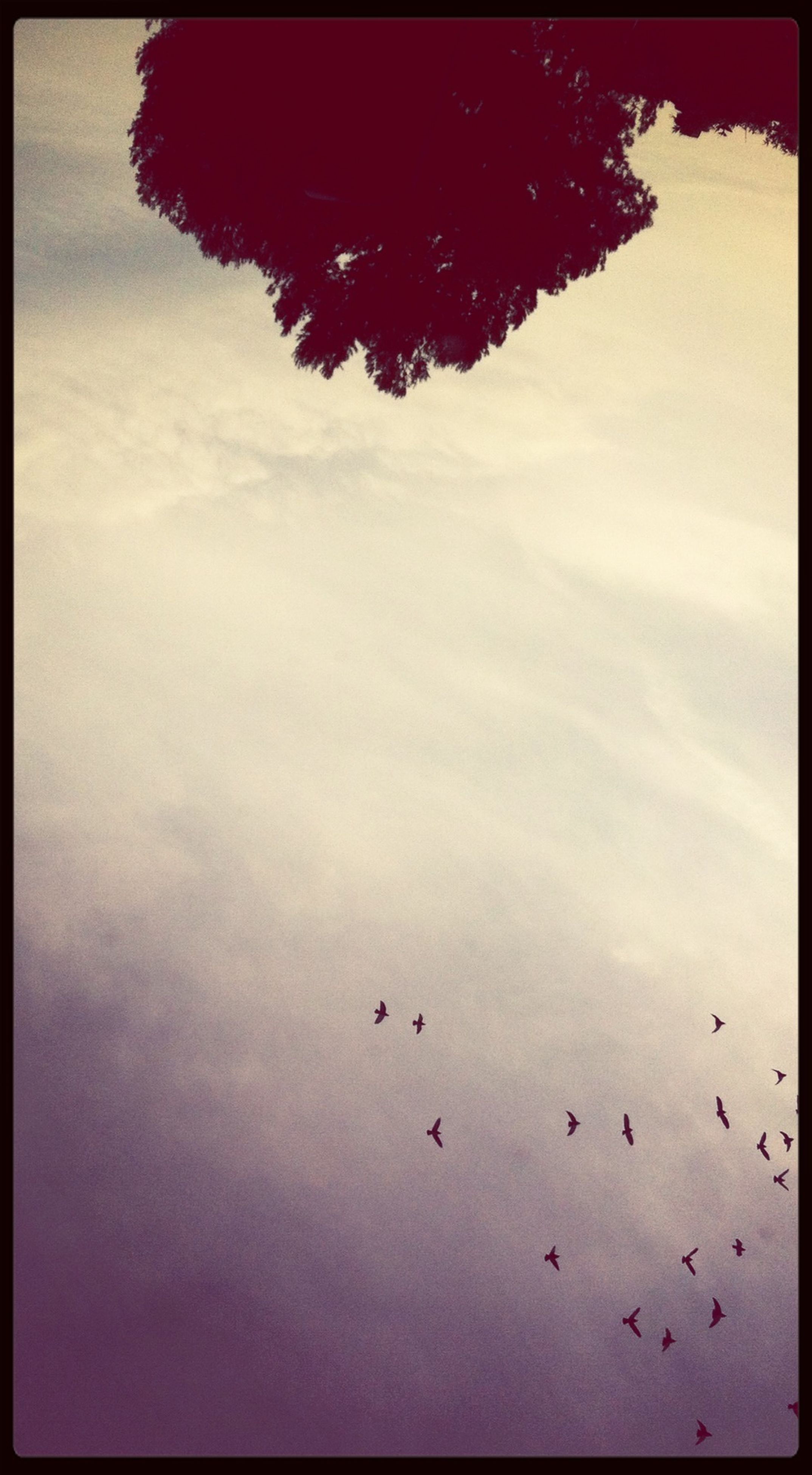 bird, animal themes, animals in the wild, low angle view, wildlife, flying, transfer print, sky, auto post production filter, tree, silhouette, flock of birds, nature, beauty in nature, mid-air, outdoors, tranquility, no people, dusk