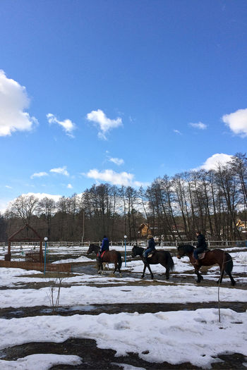 Bare Tree Beauty In Nature Cold Temperature Day Domestic Animals Horse Horse Cart Mammal Men Nature One Person Outdoors Real People Sky Snow Tree Winter Working Animal