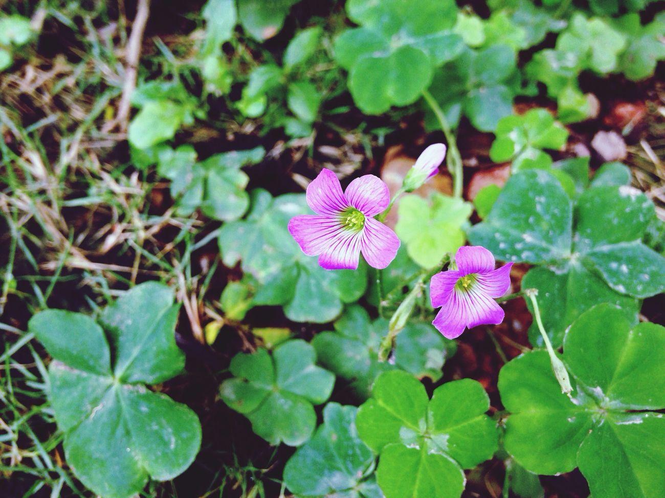 Nature 拈花惹草 Flower