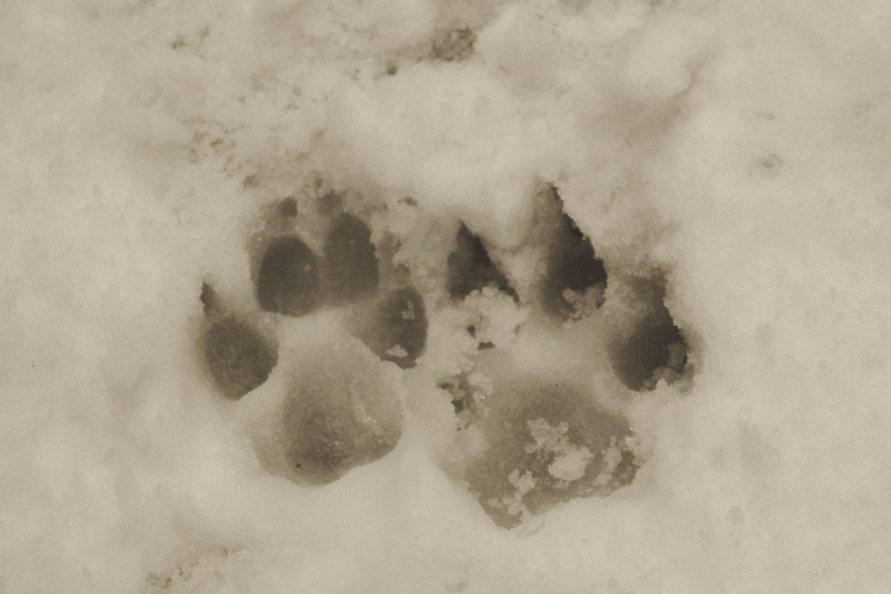 Dog Etna Impronte Linguaglossa Neve