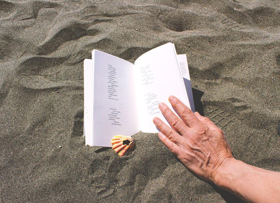 Day Human Finger Muschelschalen Outdoors Person Sand