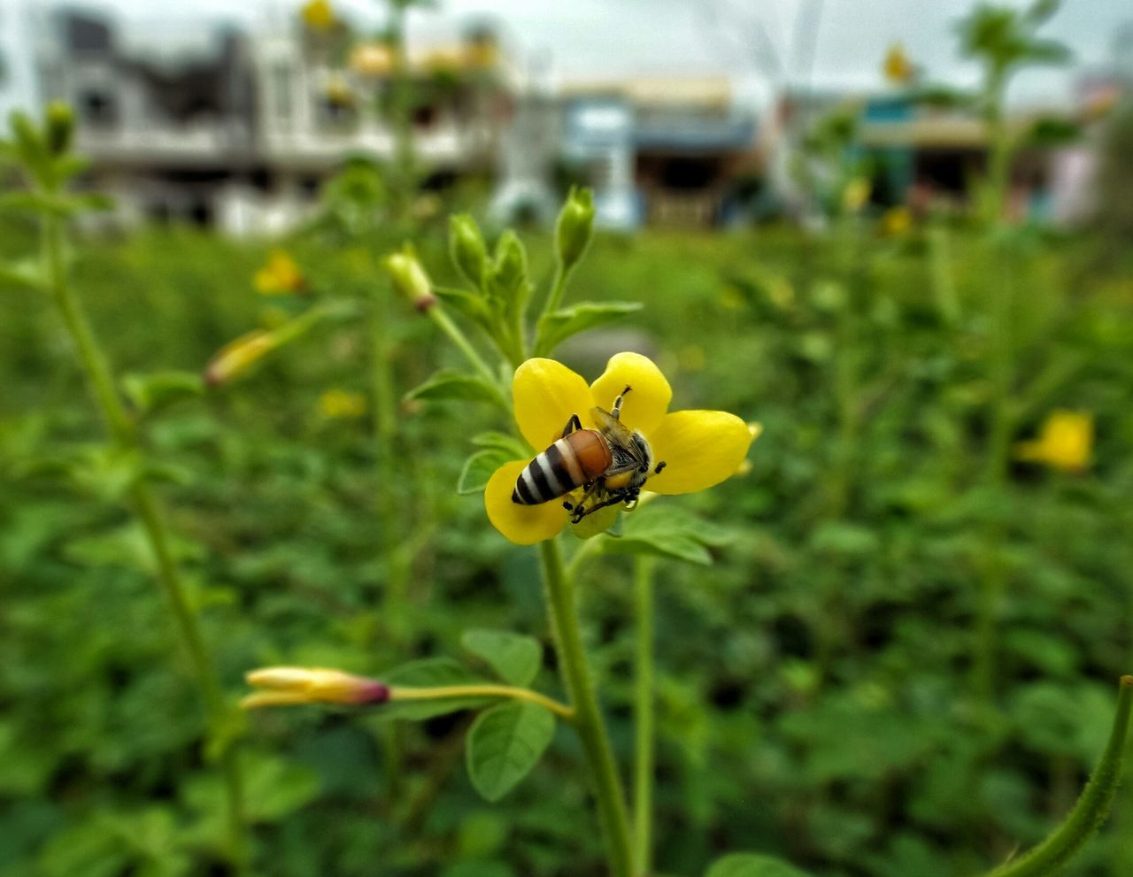 insect, yellow, flower, nature, growth, focus on foreground, plant, beauty in nature, green color, animals in the wild, fragility, day, outdoors, animal themes, close-up, no people, freshness, leaf, one animal, bee, flower head