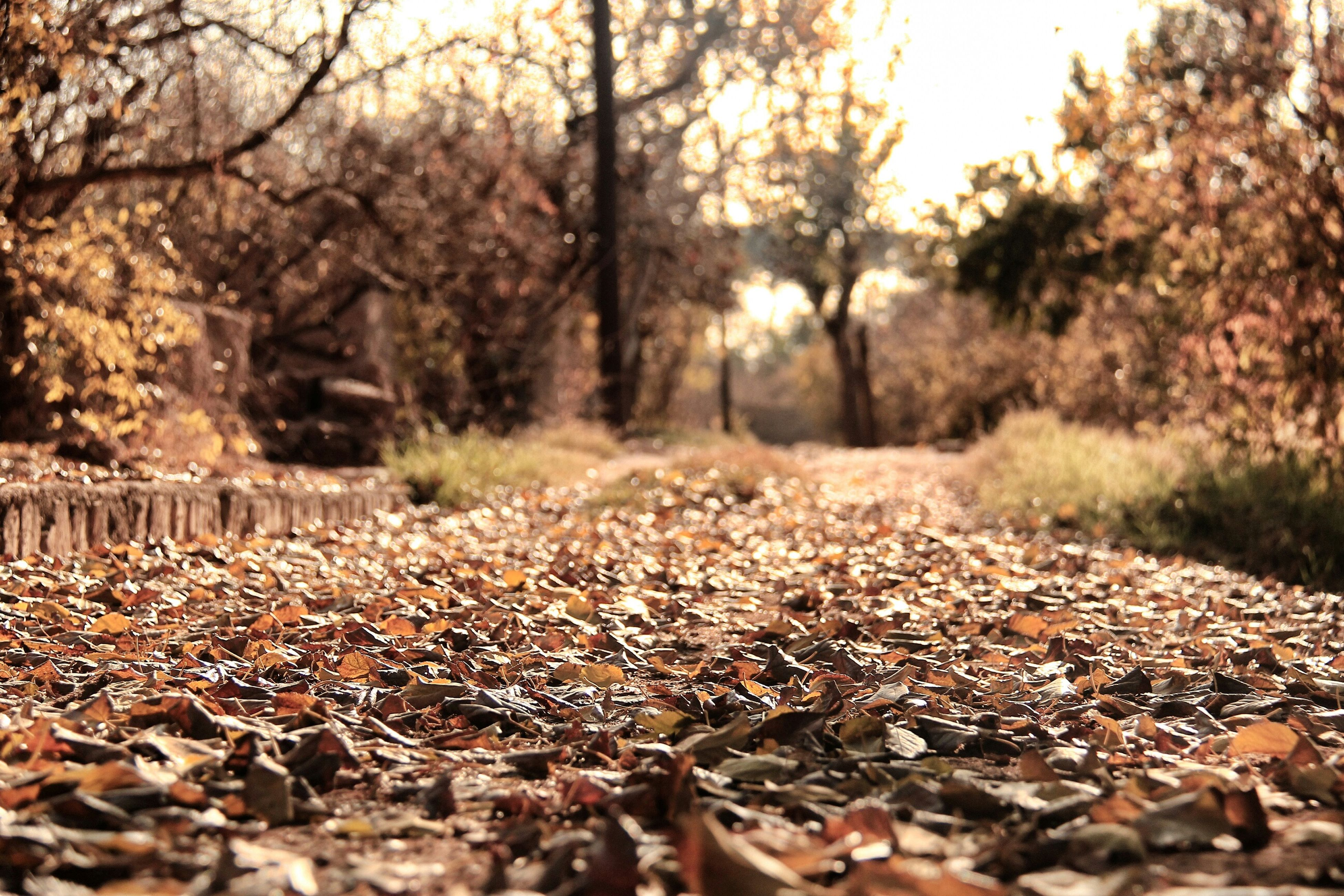 tree, surface level, tranquility, autumn, tranquil scene, forest, nature, leaf, change, fallen, beauty in nature, landscape, selective focus, falling, scenics, growth, dry, stone - object, non-urban scene, day