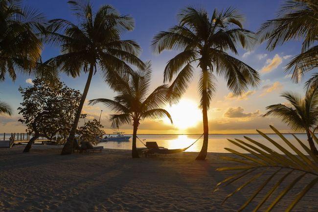 43 Golden Moments Hammock Bahamas Sunset Palm Trees Paradise