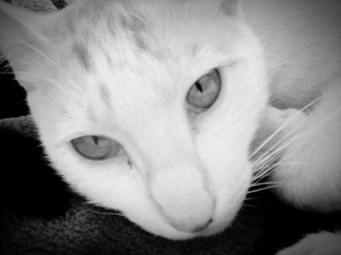 Cat Eyes Awsum