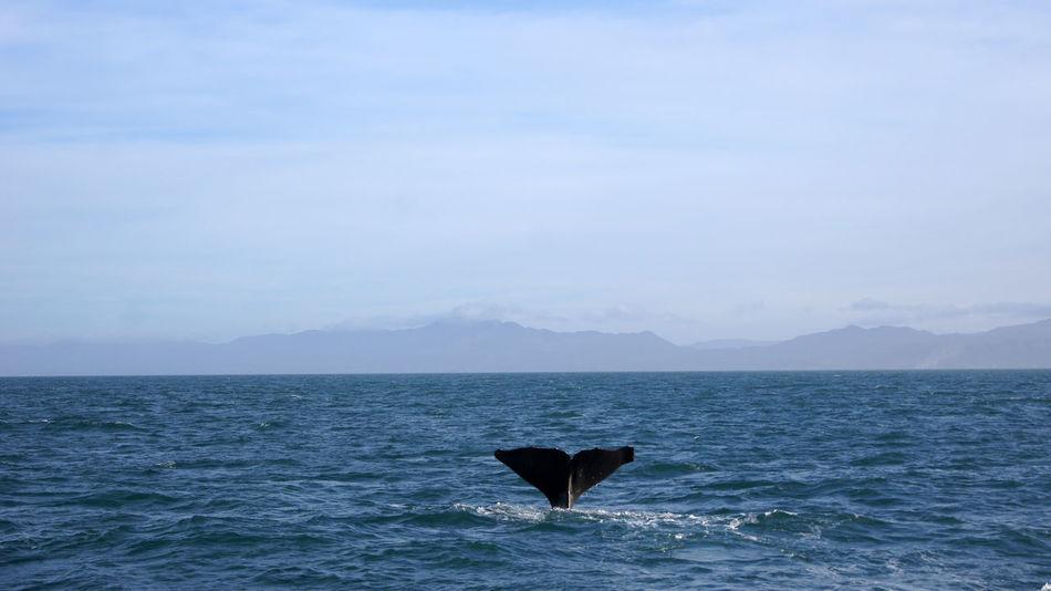 Beautiful stock photos of kunst, Animal Wildlife, Animals In The Wild, Aquatic, Aquatic Mammal