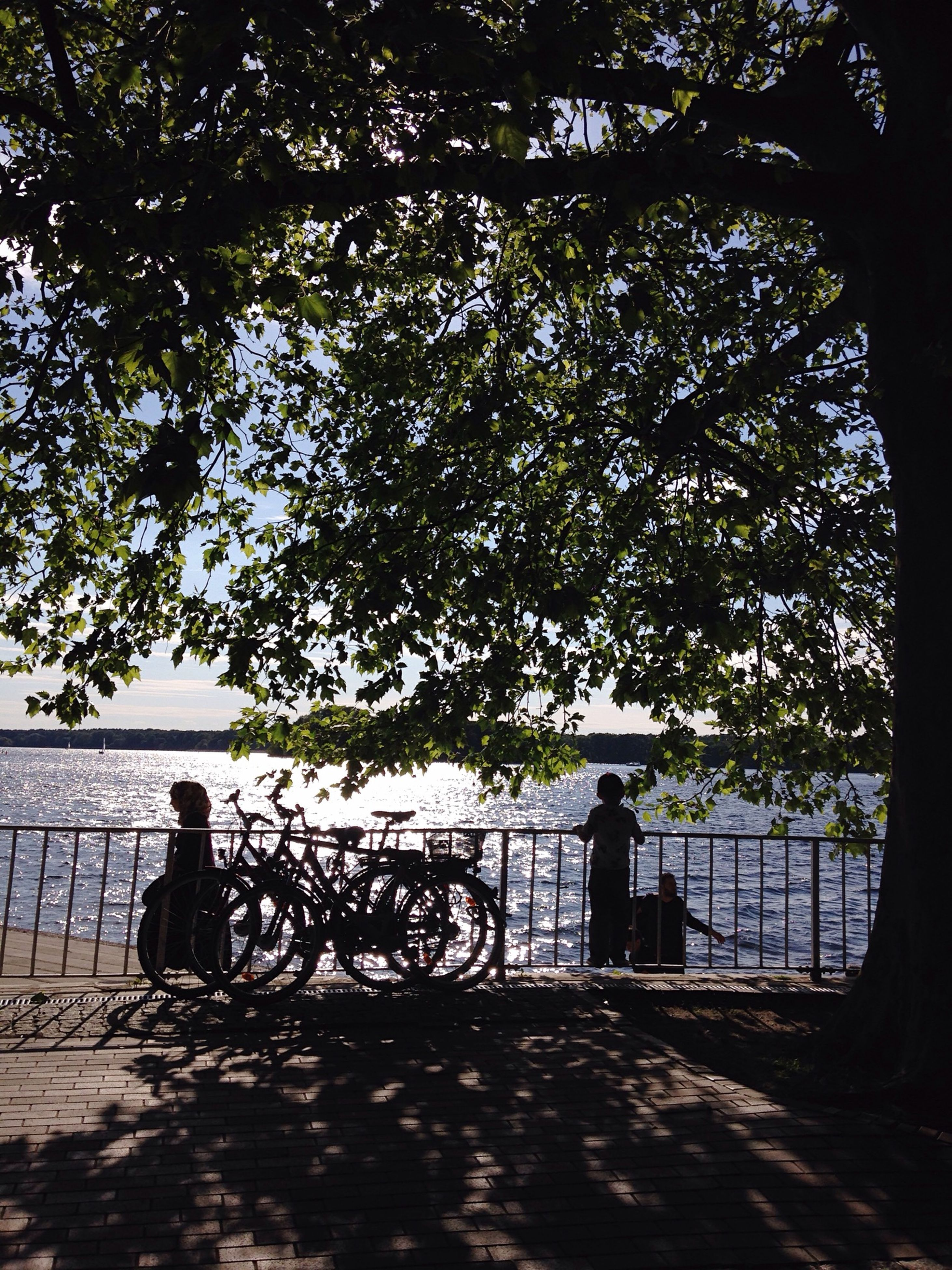 tree, silhouette, railing, fence, shadow, sunlight, branch, walking, nature, tranquility, men, day, protection, growth, outdoors, unrecognizable person, bicycle