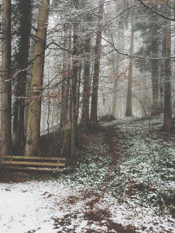 Winter Wonderland Switzerland Perfect