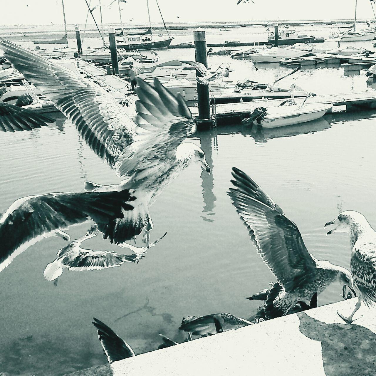 Close-Up Of Seagulls At Harbor