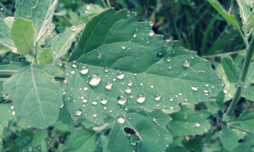 Rainy Days Raindrops Naturelover Improving On Your Doorstep Wintertime