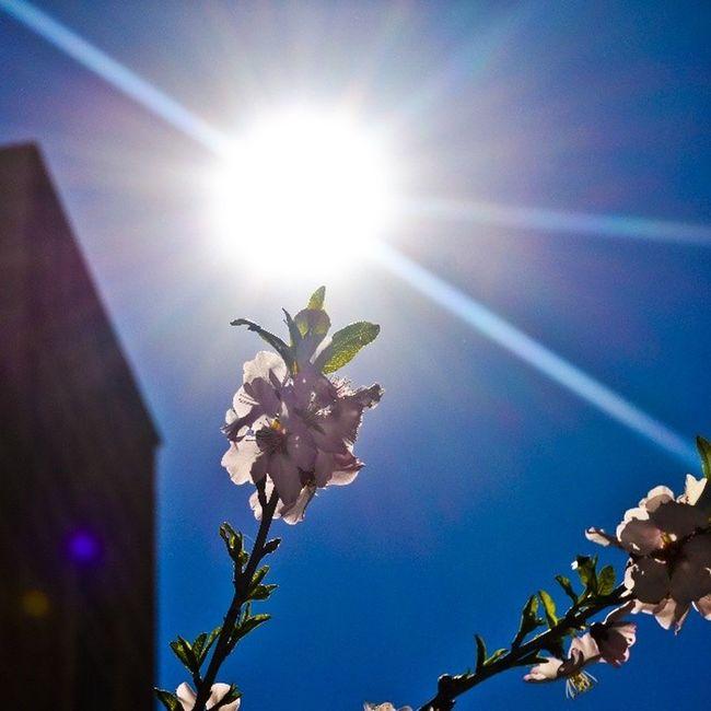 Sun Sunrays Sky_love Sky_masters sky skylovers skymasters white flower flowergram instaflower spring spiritofjordan spiritofamman beamman seeamman seejordan bejordan beautifuldestinations beautifuljordan