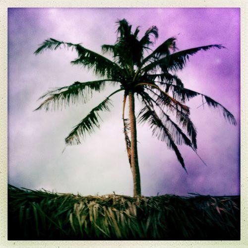 Morning Tree TreePorn Goodmorning Tree_collection