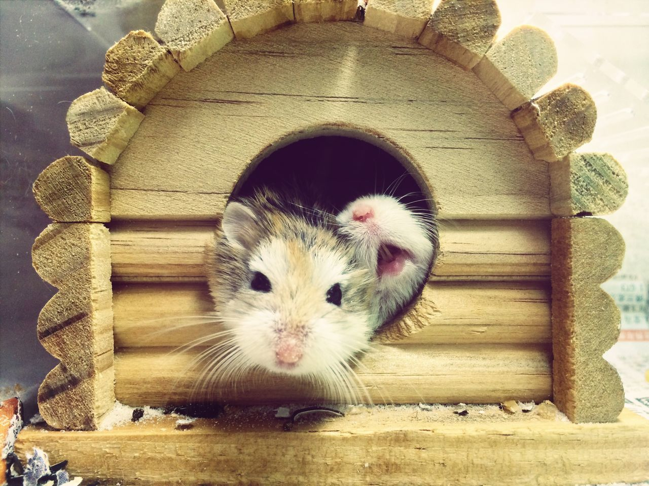 Beautiful stock photos of hamster, Animal Body Part, Animal Head, Animal Themes, Day