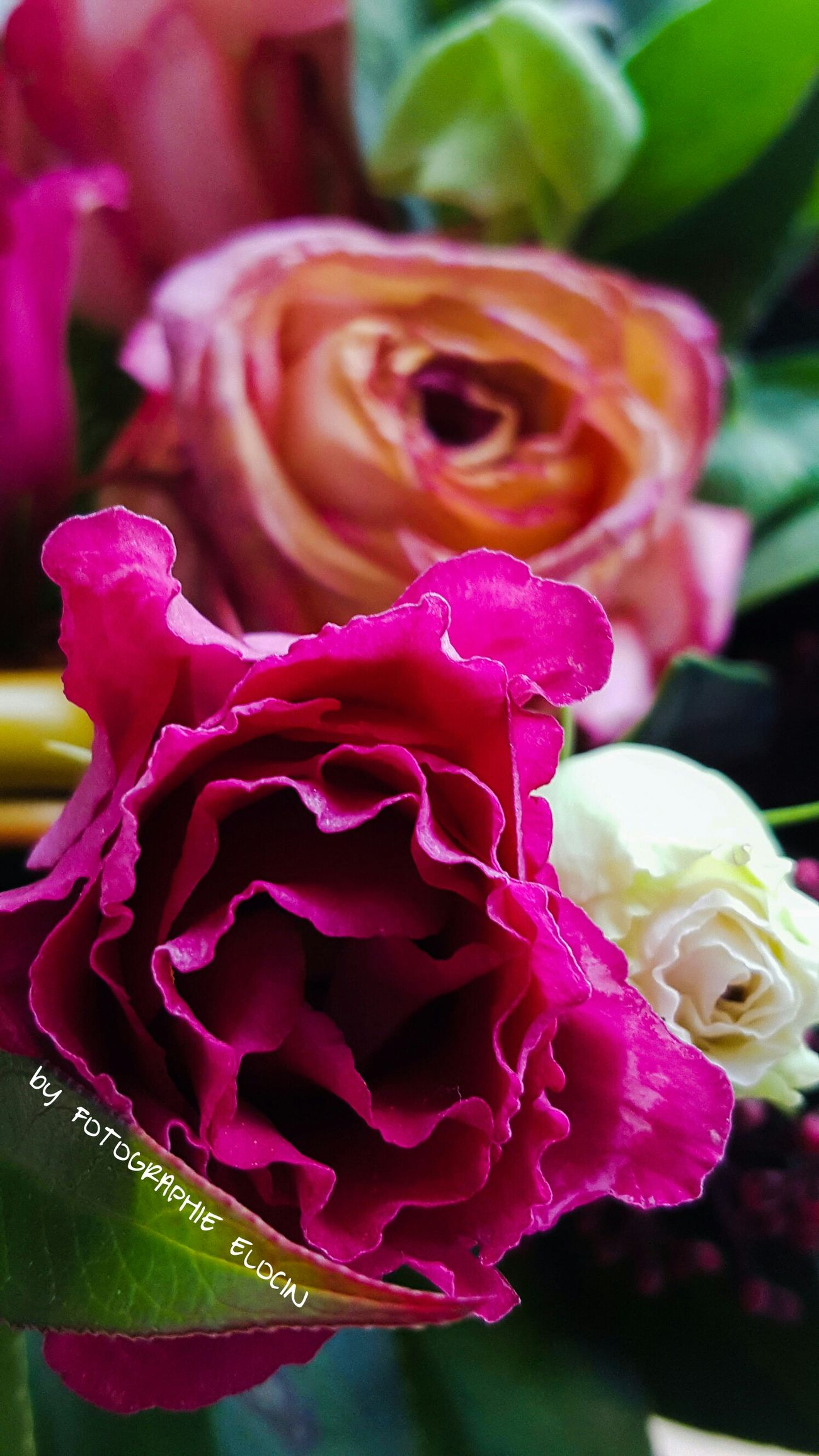 Pink time Flower Rose - Flower Beauty In Nature Pink Color Close-up Focus On Foreground Amatuerphotography Multi Colored Love Nature Fotographie_elocin Macro Photography Flowers, Nature And Beauty Rose🌹 Roses Flowers  Eye4photography  Beauty In Nature Hamburg EyeEm Masterclass Canonphotography EyeEm Nature Lover Detail Amateur Photography Canon_photos Autumn Flowers Eye4photography