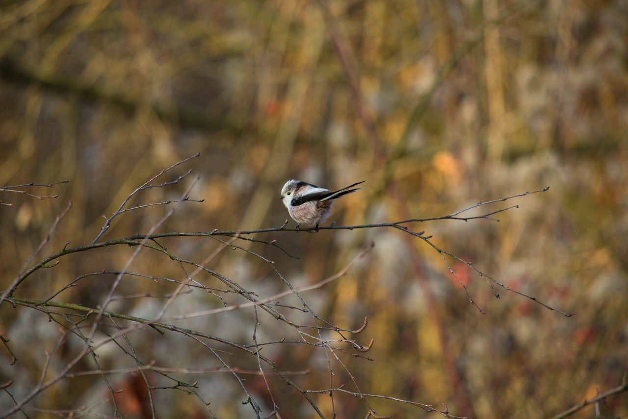 Animal Themes Animal Wildlife Animals Animals In The Wild Beauty In Nature Bird Close-up Day Focus On Foreground Love Nature Nature No People One Animal Outdoors Perching Photography Vogel