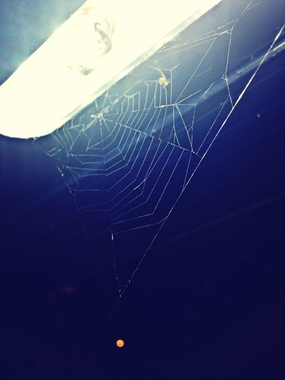 Spider Taking Photos Photo