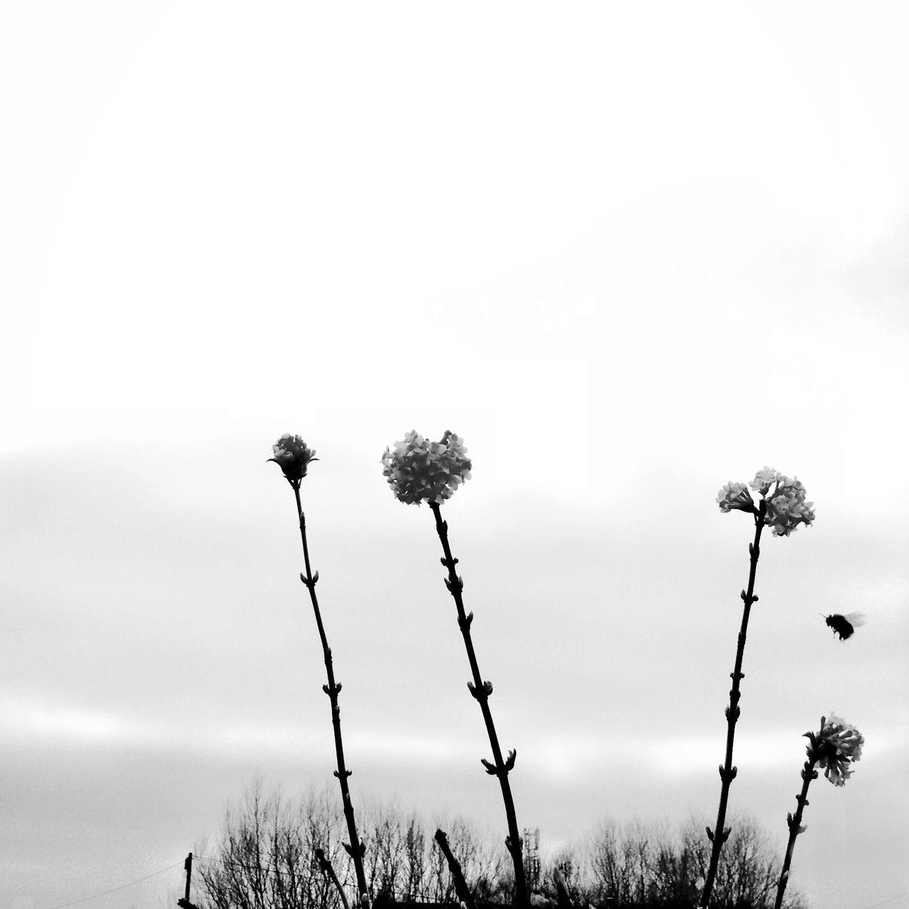 pollination NEM Black&white AMPt_community