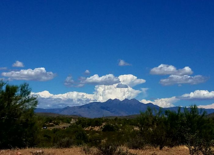 No filters needed. The Four Peaks. A wilderness area. Tallest at over 7000 feet, from the Valley of the Sun at 1300 feet. Mountain Blue Cloud - Sky Sky Outdoors No People Nature Landscape Day Grass Tree Beauty In Nature Desert Beauty🏜 Cameraphone Monsoon Skies Tranquility Landscape