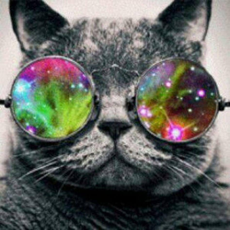 Cool Cat(detendu pose)B-)