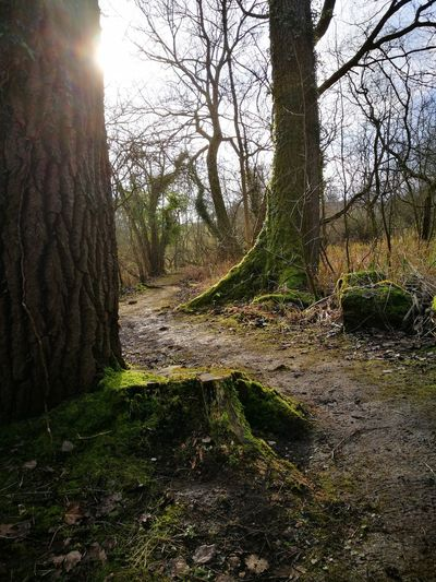 Tree Nature Growth Sunlight Tree Trunk Day Tranquility Outdoors No People Beauty In Nature Tranquil Scene Green Color Scenics Forest Grass Sky Landscape