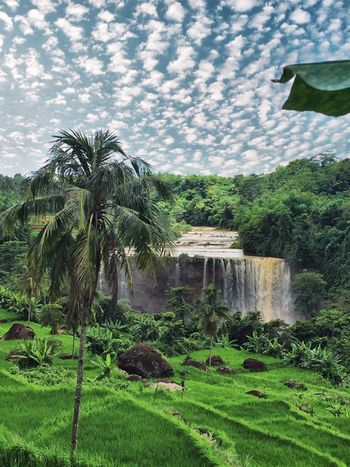 Ciletuh waterfall Tree Nature Cloud - Sky Landscape Scenics Water Sky No People Beauty In Nature Green Color Outdoors Grass Day Waterfall Lush - Description Cataract Popular Photos From My Point Of View