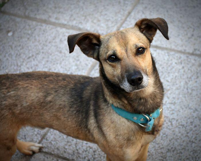 Milo Dog Pets Domestic Animals One Animal Portrait Day Outdoors No People Mascot Mascota🐶