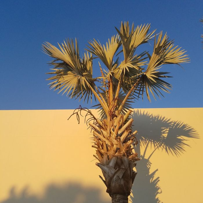 Resist Blue Tree Palm Tree Nature No People Clear Sky Close-up Day Sky Outdoors Second Acts