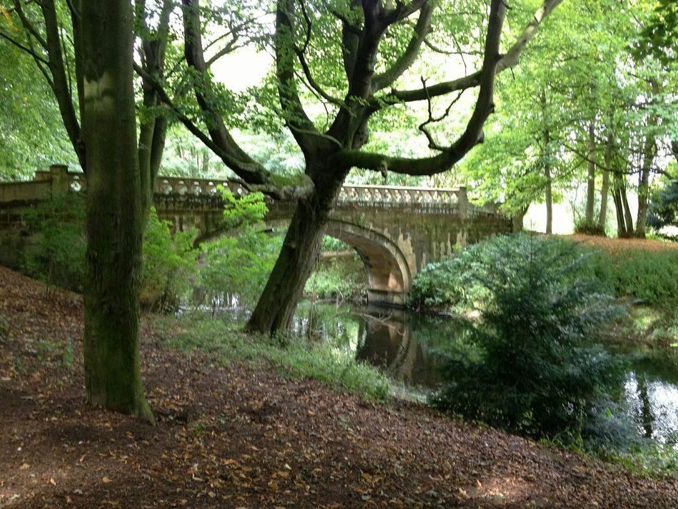 Hardwick Hall County Durham Trees Outdoors Scenery Beautiful Nature