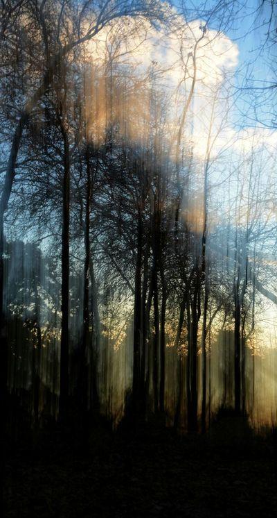Sun Light Nikonphotography Ligth And Shadow EyeEm Nature Lover Iranian Garden Tree Art The Traveler - 2015 EyeEm Awards The Photojournalist - 2015 EyeEm Awards ArtWork New Years Resolutions 2016