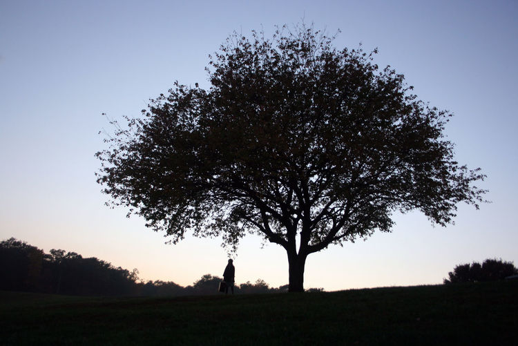 Dusk Nature Silhouette Tree
