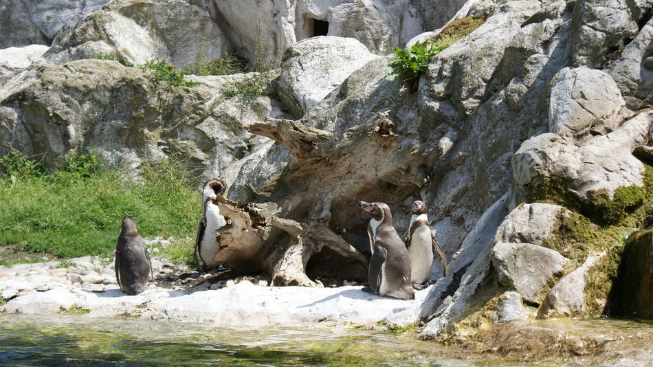 Animal Themes Animal Wildlife Animals In The Wild Beauty In Nature Day Full Length Mammal Nature No People Outdoors Rock - Object Rock Formation Standing Togetherness Water