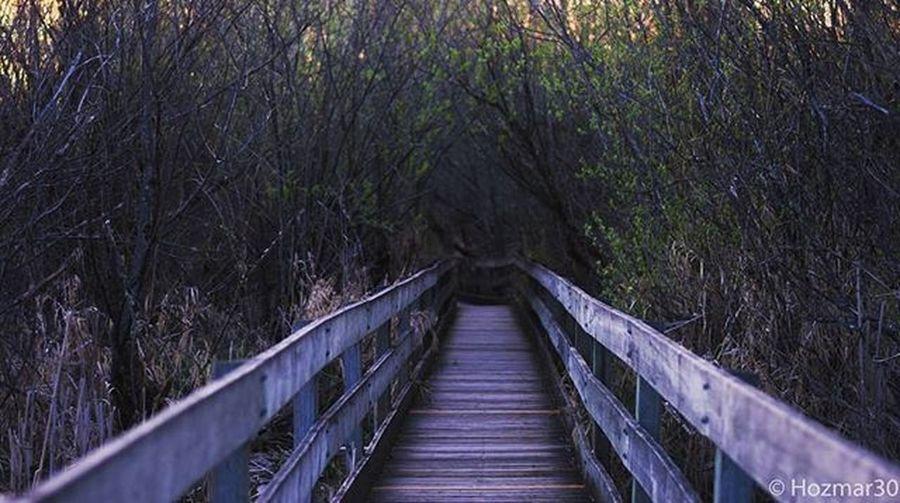 Path Boardwalk Destiny Marymoor Throughthewoods Adventure Adventurephotography Pacificnorthwest Washington Washingtonstate Redmond Redmondwashington Naturewalk