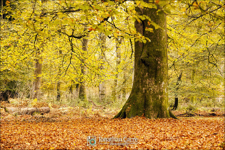 Beautiful autumn colours in the New Forest, Hampshire, England. Yellow Nature No People Outdoors Tree Beauty In Nature Outdoor Adventure Outdoor Photography Tourism Landscape Nature Newforest Autumn Autumn Leaves Autumn Colours Forest