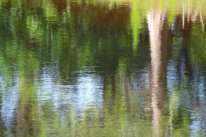 Reflections on Trees Abstract Beauty In Nature Grass Green Lake Nature Pond Reflecting Reflecting Water Reflection Reflections In The Water Trees Water Great Outdoors-EyeEm Awards 2017