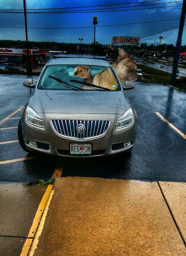 https://youtu.be/IfZbFh7qlCQ Driving Miss Gunness The K9GB Joyride Buick Banditos Musical Photos Street Photography My Dogs Are Cooler Than Your Kids EyeEm Animal Lover Who's Afraid Of The Big, Bad Wolf? Notes From The Road Make Your Own Path